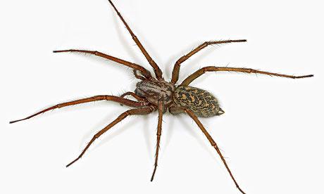 House-Spider-001